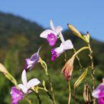 Flores da Mata Atlântica