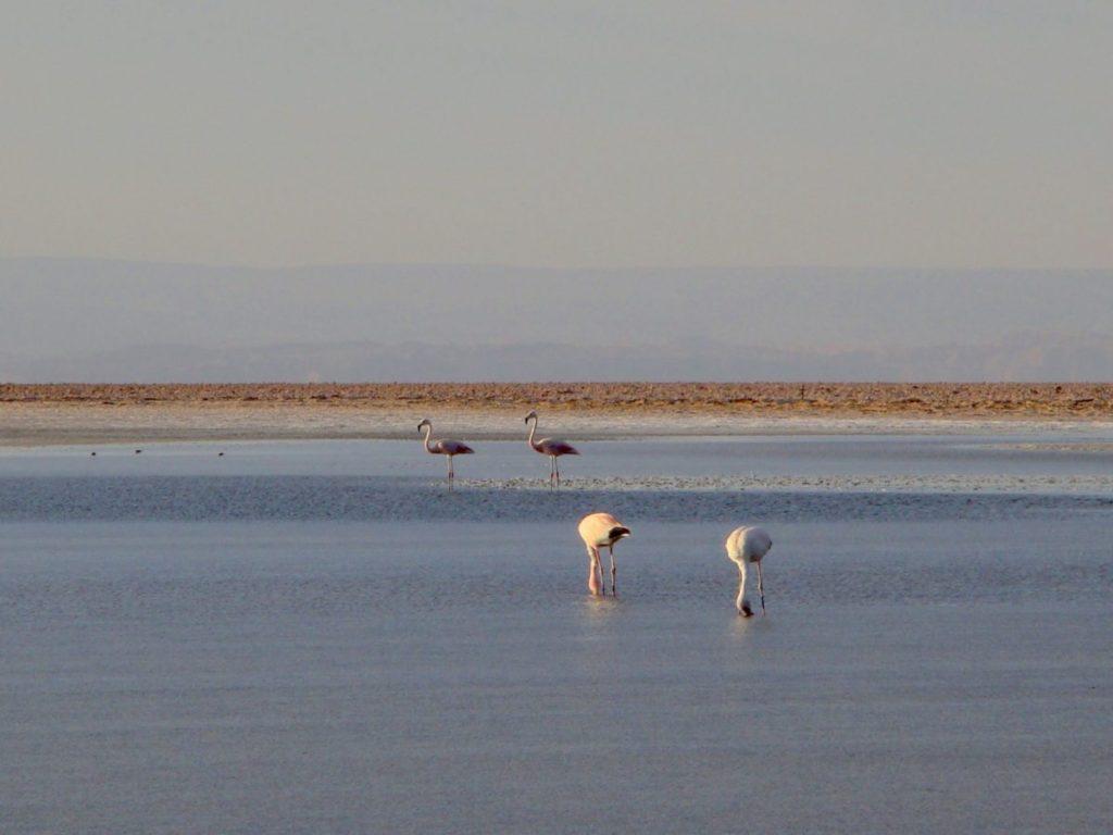 Reserva Nacional dos Flamingos
